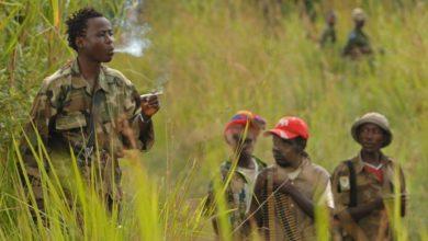 Photo of RDC : Au moins 34 civils massacrés par les ADF en une semaine en territoire de Beni, 788 tués en 9 mois (CEPADHO)