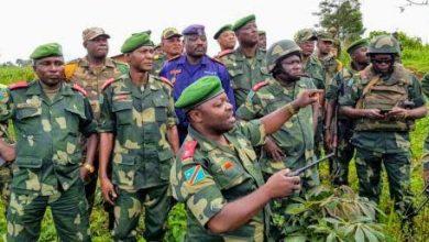 Photo of RDC : Plus de 500 vaches récupérées par l'armée congolaise et cinq rebelles neutralisés en Ituri