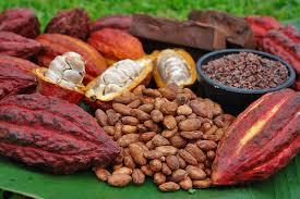 Photo of RDC : Le Cacao de Beni source de revenus des ADF avec la complicité de certaines sociétés locales (Véranda Mutsanga