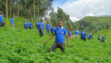 Photo of Masisi : Des tonnes de pommes de terre attendues par la COJUDD pour une banque de semences dans la région